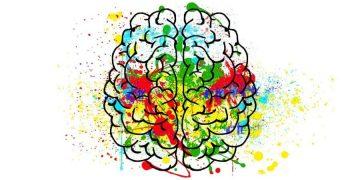 10 продуктов, улучшающих работу мозга