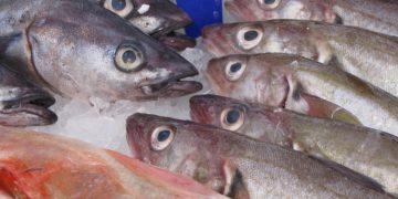 7 показателей свежести рыбы